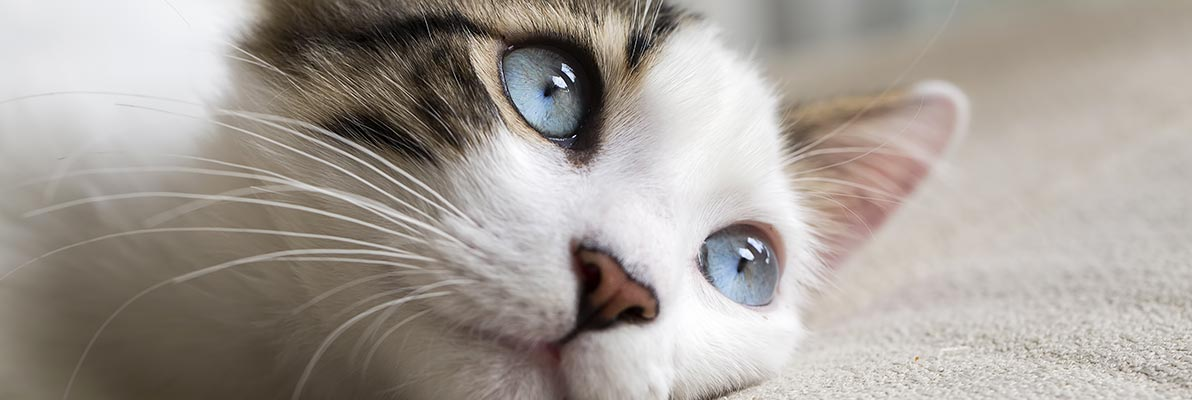 10 raisons d'avoir un chat